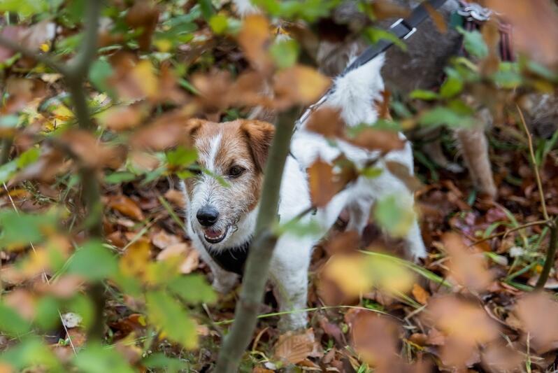 Buszowanie po lesie to dla psiaków wielka frajda. Jeśli nie macie planów na sobotę, weźcie swoje czworonogi i chodźcie na wspólny spacer w Otominie