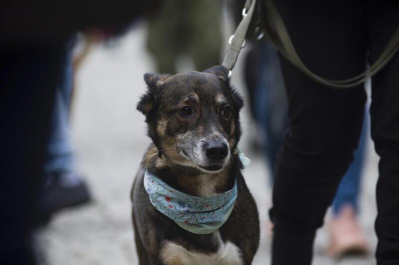 25 października obchodzony jest Dzień Kundelka . Najlepszym prezentem w takim dniu jest podarowanie psiakowi nowego domu:)