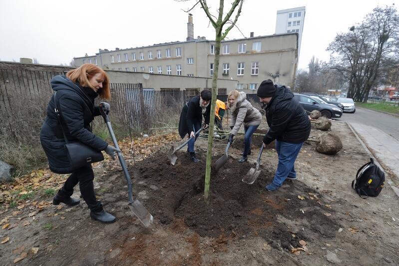 2019-11-27_sadzenie_drzew_021_799x533.JPG