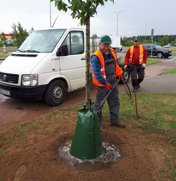 Drzewo z zapasem wody w worku