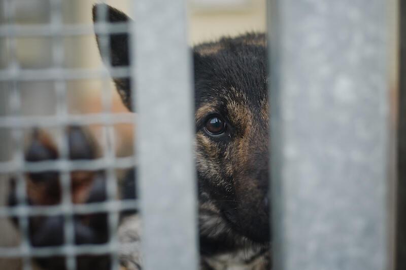 Ich smutny wzrok mówi więcej niż słowa... W czasie dzielenia się dobrem, nie zapominajmy o bezdomnych zwierzętach