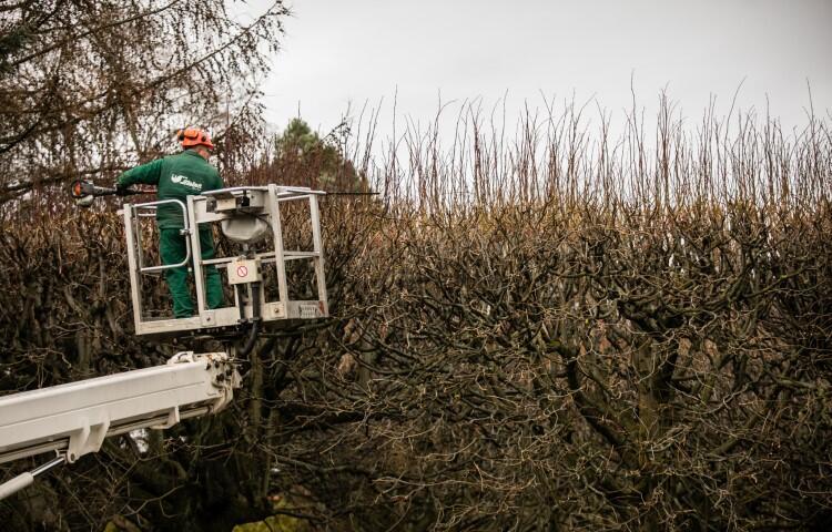 Bindaż to obustronnie obsadzona drzewami lub pnączami aleja, których pędy splatają się nad drogą tworząc sklepienie. Forma oliwskich lipowych bindaży powstała przeszło 200 lattemu