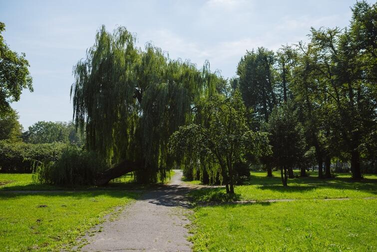 Po intensywnych opadach woda spływa z al. Zwycięstwa na teren Parku Steffensów