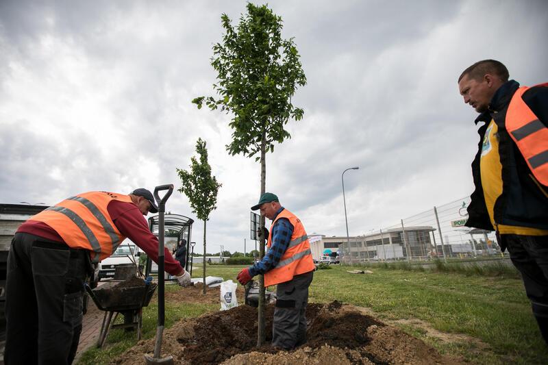 W 2019 roku posadzono na terenie Gdańska 2 159 drzew