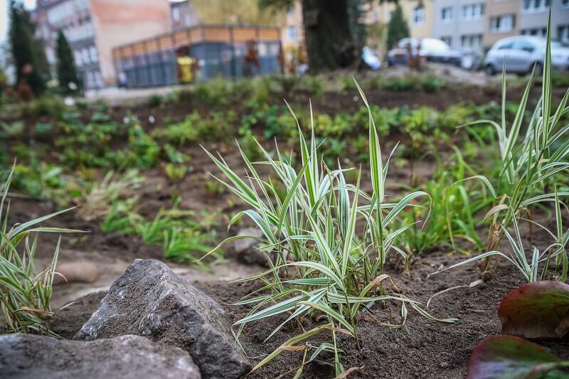 Ogród deszczowy przy ul. Za Murami w śródmieściu Gdańska