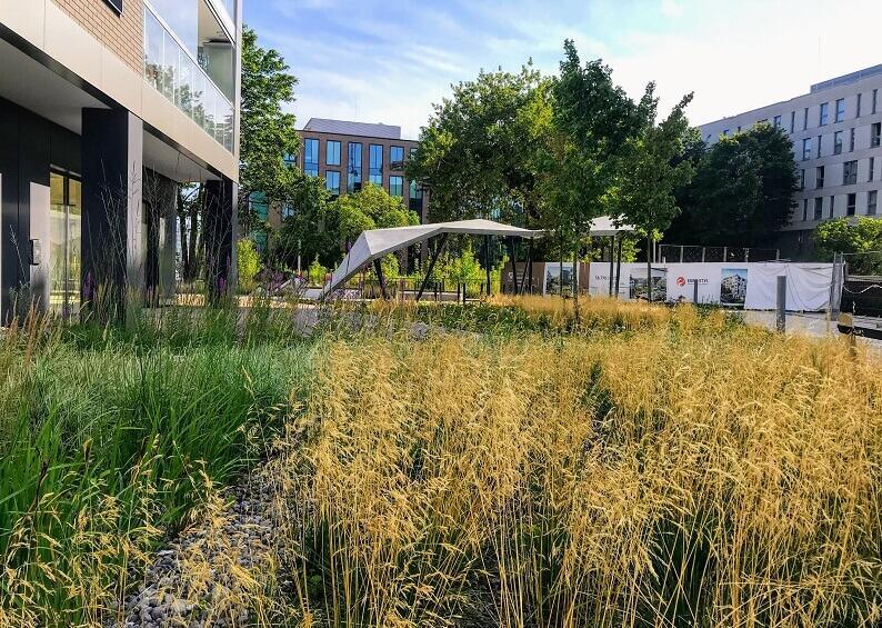 Pierwszy prywatny ogród deszczowy powstał na Osiedlu Idea na Przymorzu