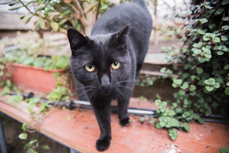 W schronisku Promyk przebywa aktualnie 60 kotów. Są wśród nich też czarne słodziaki, które przynoszą dużo szczęścia!