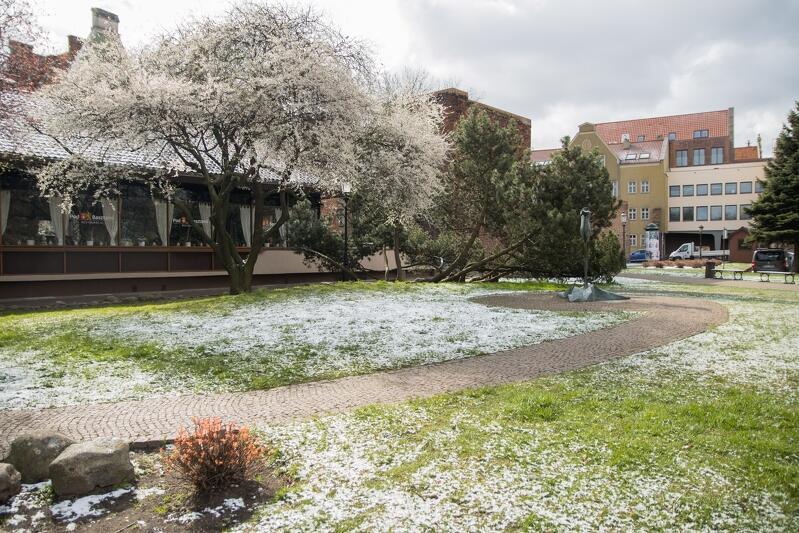 Śnieżny puszek przyozdobił gdańskie trawniki, drzewa, ulice... dość niespodziewanie, bo w ostatnich dniach marca spodziewamy się raczej wiosennej pogody