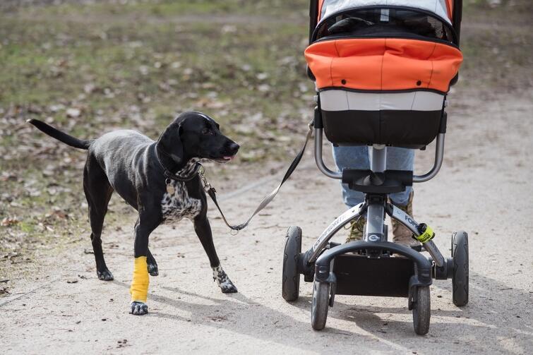 Osoby niepełnoletnie nie mogą wychodzić z domu bez opieki osoby dorosłej. Jest jednak kilka wyjątków od tego zakazu, to m.in. spacer z psem