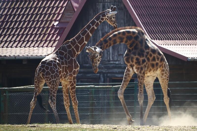 Gdański Ogród Zoologiczny z powodu pandemii koronawirusa jest zamknięty od 13 marca 2020 roku