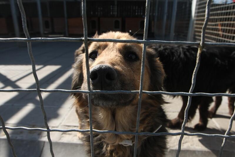 Schronisko dla Bezdomnych Zwierząt Promyk w poniedziałek 18 maja ponownie zostało otwarte dla wolontariuszy. Adopcje zwierząt mają zostać wznowione w ostatnim tygodniu maja br.