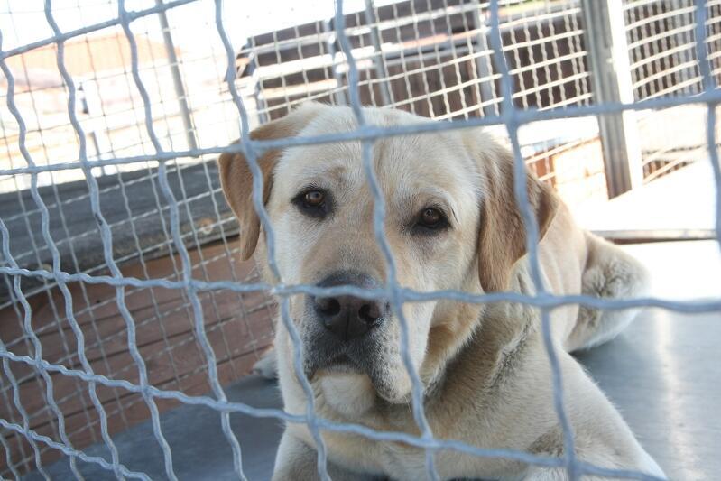 Przez ponad dwa miesiące wolontariusze nie mogli opiekować się podopiecznymi ze schroniska. Od poniedziałku 18 maja zwierzęta ponownie będą widywać się z osobami, które poświęcają im swój wolnych czas