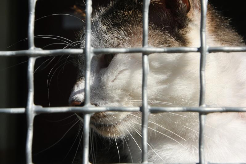 Po ponownym wpuszczeniu wolontariuszy na teren schroniska, kotami będą mogły opiekować się dwie osoby dziennie
