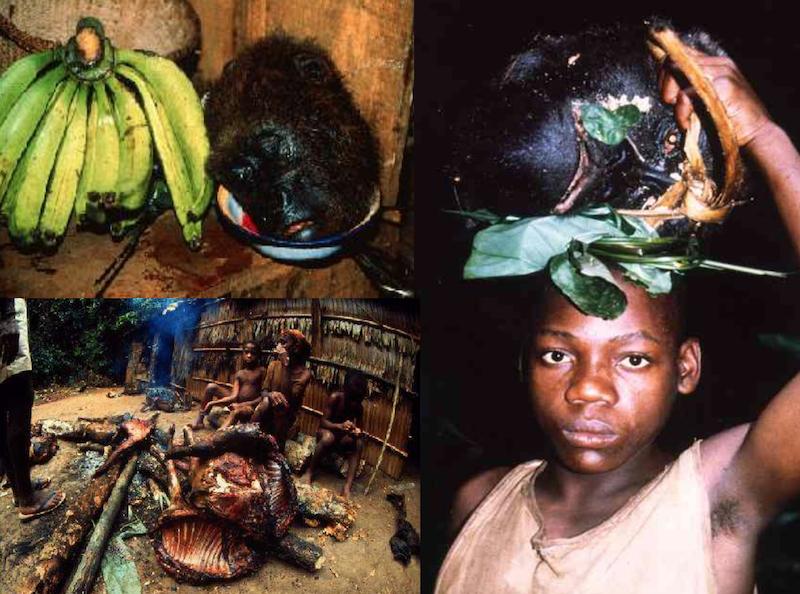 Odcinek poświęcony tematowi nielegalnego handlu i zabijania zwierząt będzie zawierał poruszające zdjęcia
