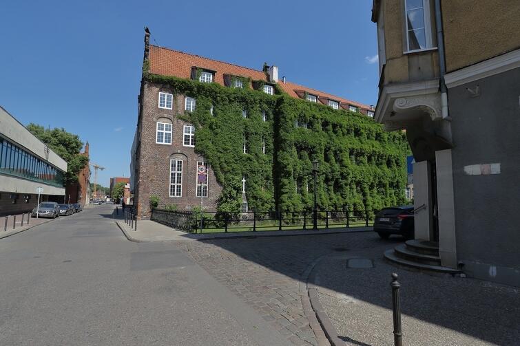 Jeden ze znaków rozpoznawczych ul. Elżbietańskiej - budynek uniwersytecki opleciony zielenią