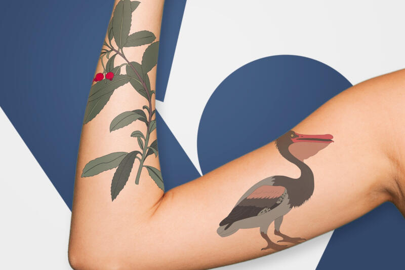 Tatuaże ze wzorami z pamiętnika podróżnika Nathaniela Gerlacha kupić będzie można na www.sklepikm.pl