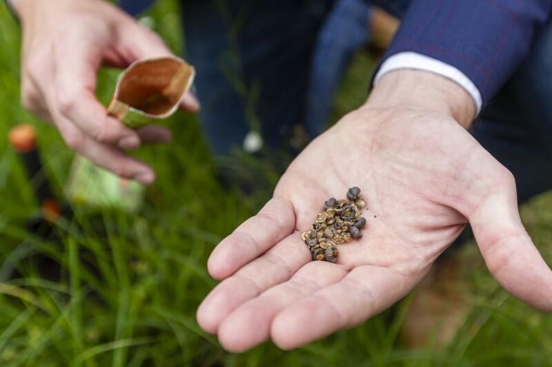 Torebki z nasionami kwiatów łąkowych - to forma podziękowania mieszkańcom, przez Miasto Gdańsk, za aktywny udział w ostatnich wyborach prezydenckich