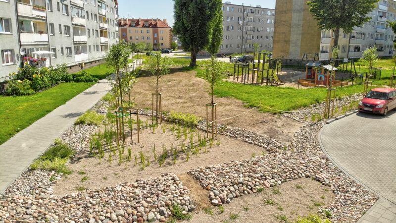 Na wyznaczonych podwórzach na Stogach zasadzono roślinność hydrofitową