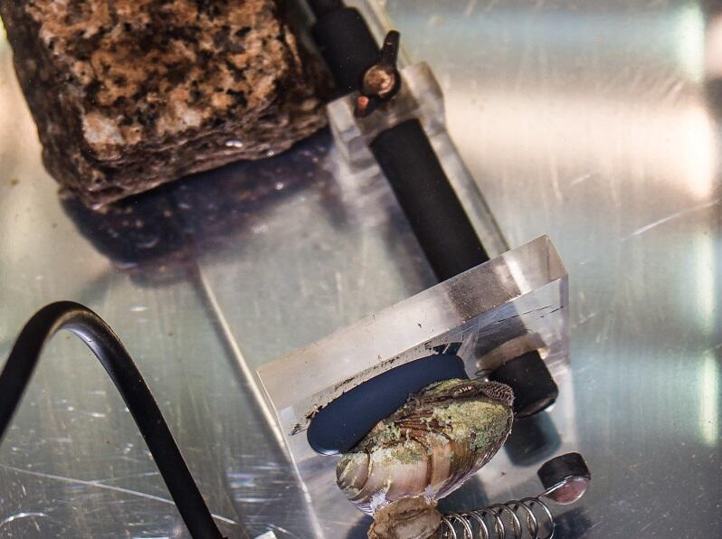 Małże przyklejone są z jednej strony muszli do postumentu zanurzonego w zbiorniku, z drugiej - przymocowany jest magnes. Kamień stabilizuje postument w zbiorniku