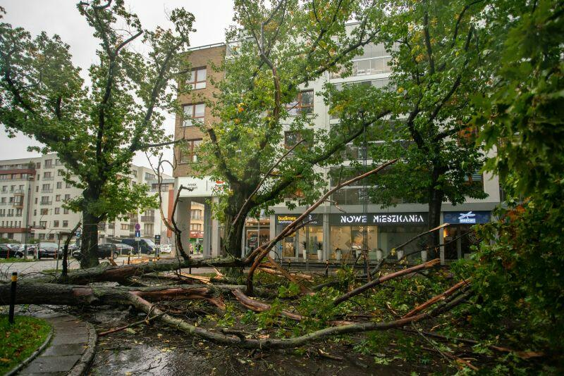 Strzyża. Powalone drzewo przy ul. Szymanowskiego