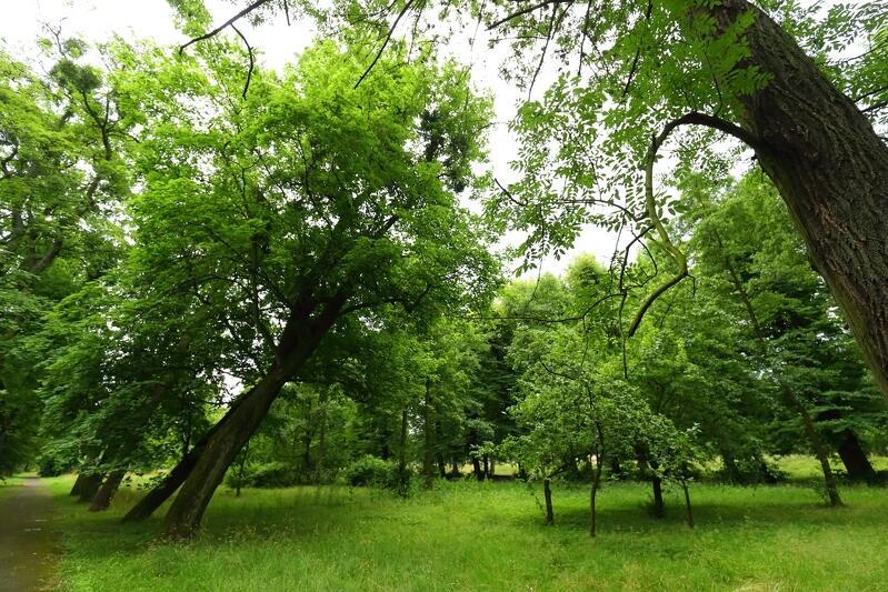 Park dedykowany osobom zależnym powstać ma w Osowej
