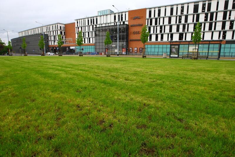 Tak wyglądał teren, na którym teraz powstaje ogród deszczowy, w maju br.