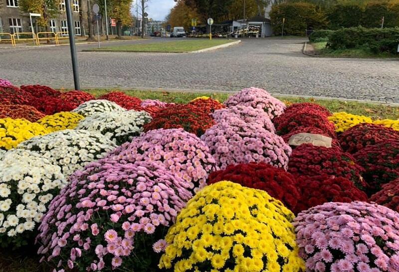 Kupujmy kwiaty na balkony i znicze na zaś - jest ich pełno pod każdą z gdańskich nekropolii