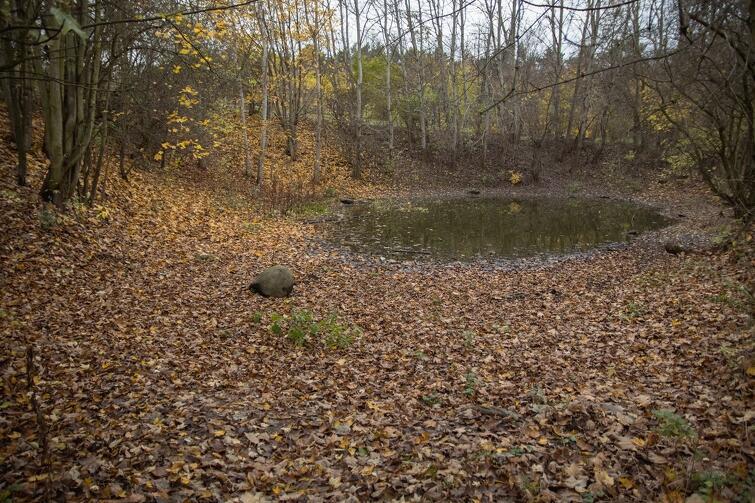 Mieszkańcy chcą, by oczko wodne przy ul. Góralskiej ponownie stało się obfitym zbiornikiem wodnym