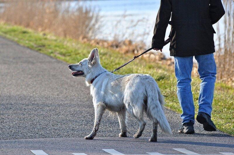 Mieszkańcy Trójmiasta przebywający na kwarantannie oraz seniorzy mogą znaleźć na Pethomer.com wolontariuszy, którzy wyprowadzą ich zwierzaka na spacer i bezpiecznie odprowadzą go do domu