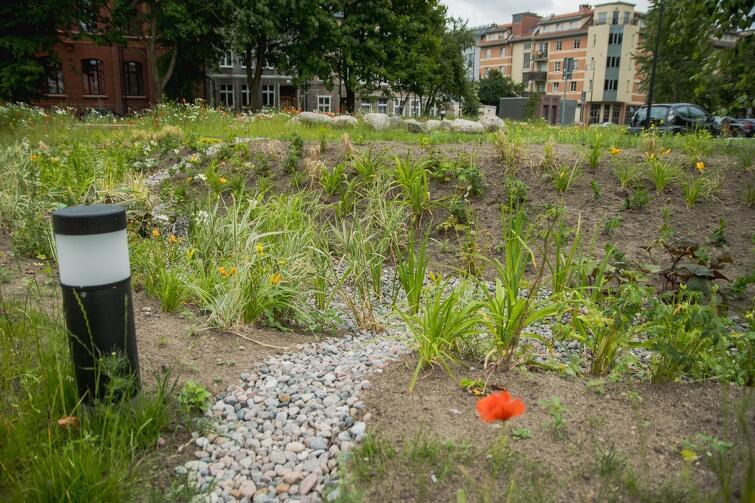 Tegoroczną nowością gdańskiego BO jest tzw. Zielony Budżet Obywatelski. W jego ramach można było m.in. składać projekty dotyczące budowy ogrodów deszczowych. Na zdjęciu - ogród deszczowy przy budynku Lastadia na Dolnym Mieście