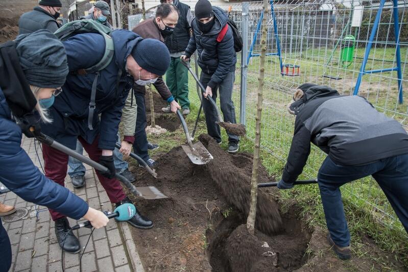 Radni dzielnicy Oliwa ciężkiej pracy się nie boją. Z myślą o przyszłych pokoleniach - zasadzili w poniedziałek, 14 grudnia, pięć drzewek
