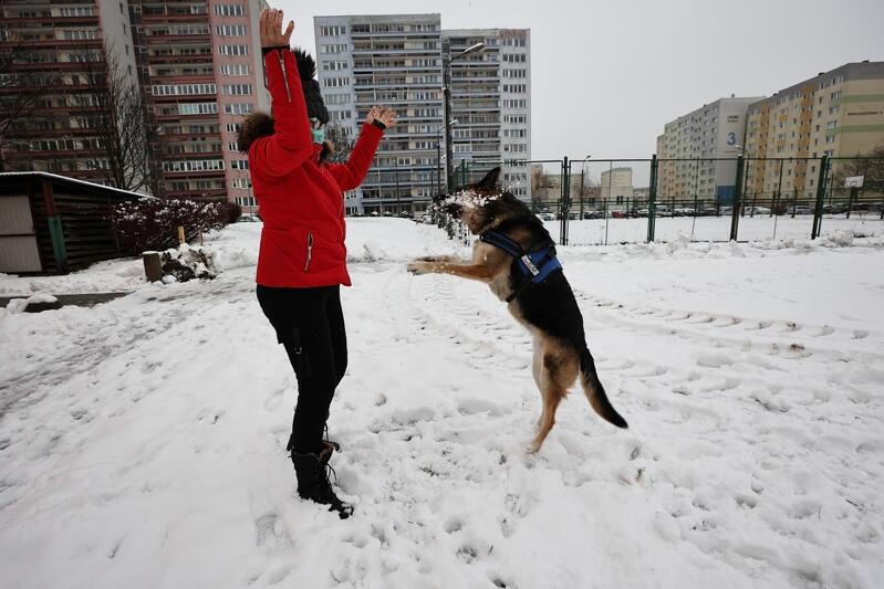Zabawa na śniegu to doskonała rozrywka nie tylko dla najmłodszych. Psiaki i ich właściciele też kochają, gdy na dworze jest biało