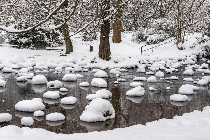 Bajkowo wygląda zimą potok w Parku Oliwskim