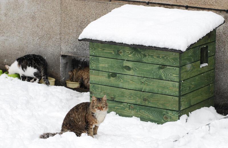 Na przestrzeni 15 lat, dzięki zaangażowaniu mieszkańców, Miasto Gdańsk kupiło 1,5 tysiąca budek dla bezdomnych kotów