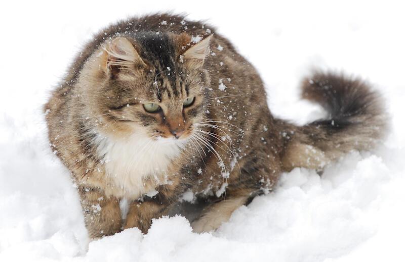 Nie odmawiajmy schronienia wolnobytującym kotom dla których mroźna zima to wyjątkowo trudny czas. Udostępnijmy im piwnice czy klatki schodowe
