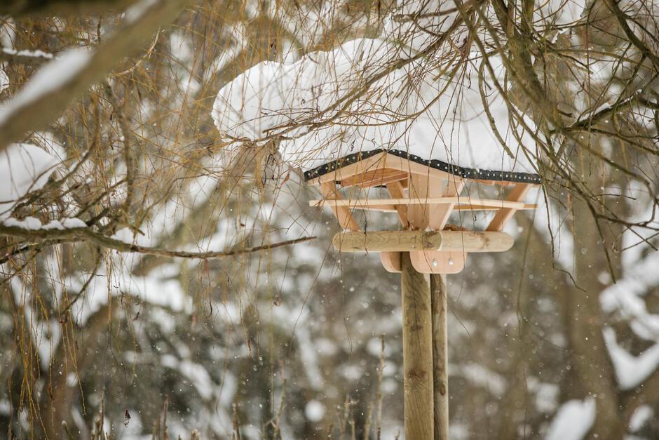 Każdy może zbudować lub kupić swój własny karmnik dla ptaków