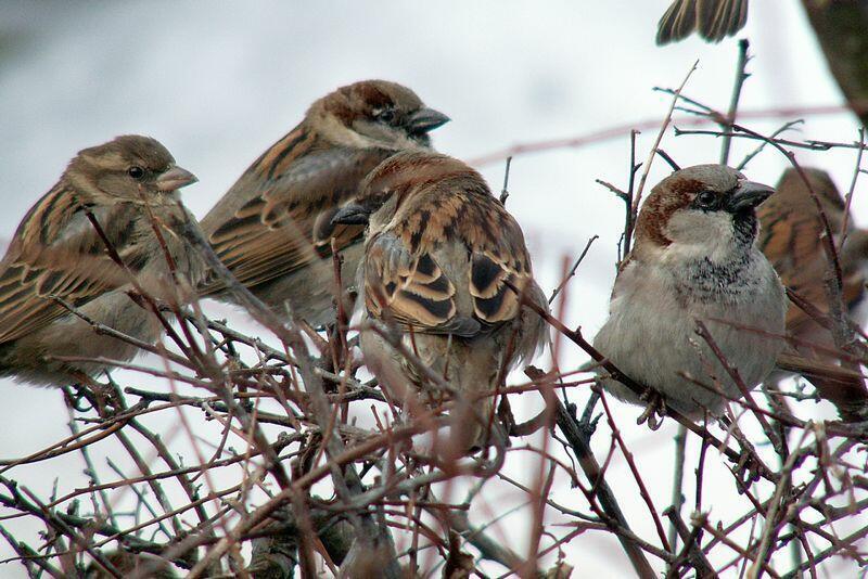 Pomaganie ptakom to wspaniały gest. Ważne, by robić to z głową