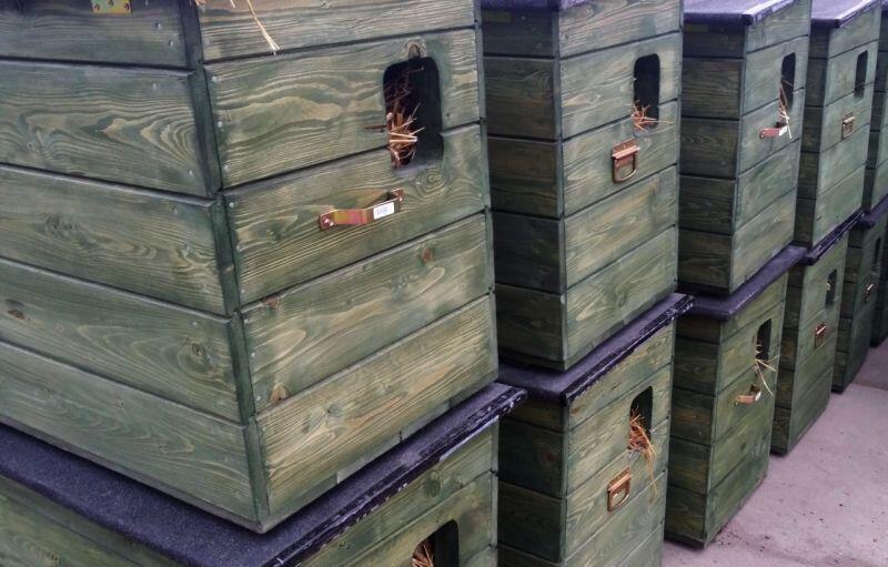 Solidnie wykonane domki dla kotów pozwolą im przetrwać zimę