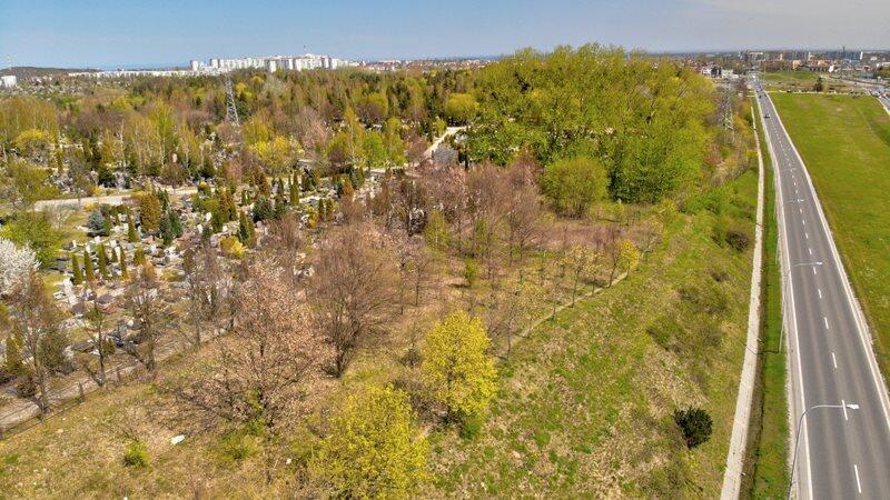Fragment Cmentarza Łostowickiego przy al. Armii Krajowej. To w tej okolicy nekropolia będzie powiększana