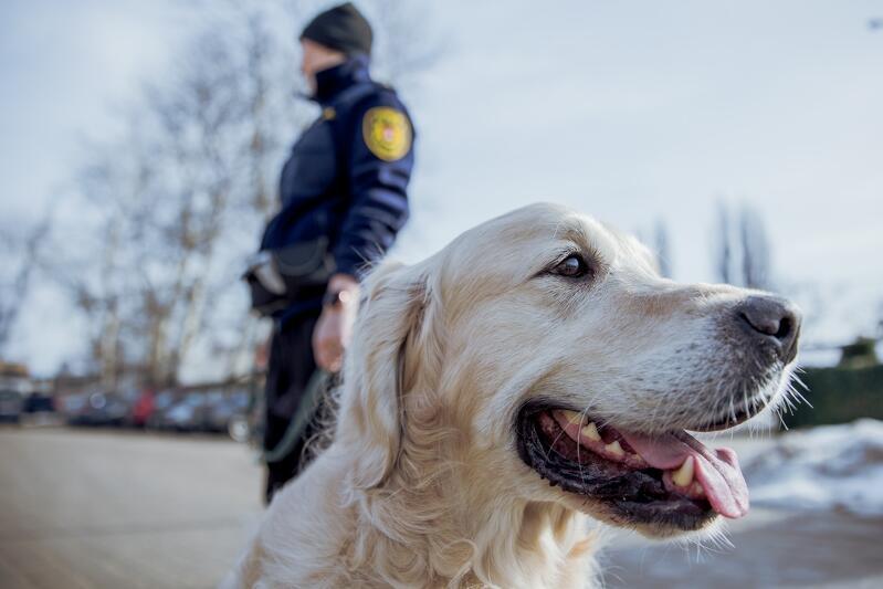 Historia psów służących w Straży Miejskiej w Gdańsku sięga 1997 roku