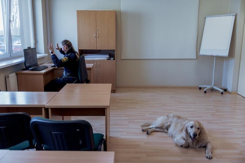 Żaneta Zander wita się z dziećmi siedzącymi w klasie, Marley czeka na swoją kolej