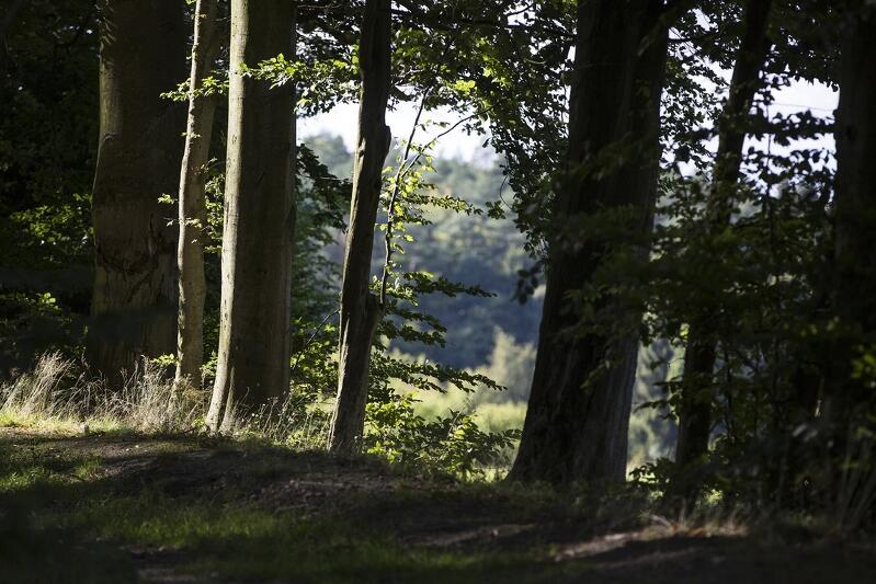 Większością głosów radnych przyjęto w czwartek rezolucję w sprawie ochrony lasów TPK