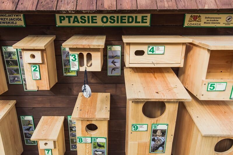 Na Wyspie Sobieszewskiej zbudowano... ptasie osiedle