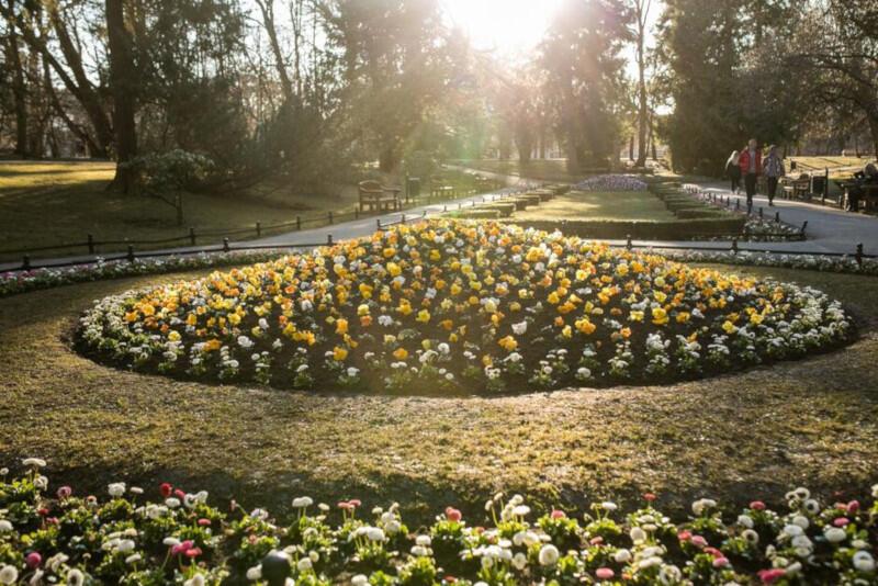 W Gdańsku posadzonych zostanie w tym roku ponad 55 tysięcy kwiatów
