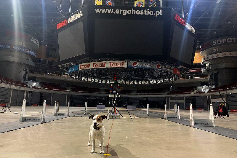 Jeden psów z trenujących w Ergo Arenie