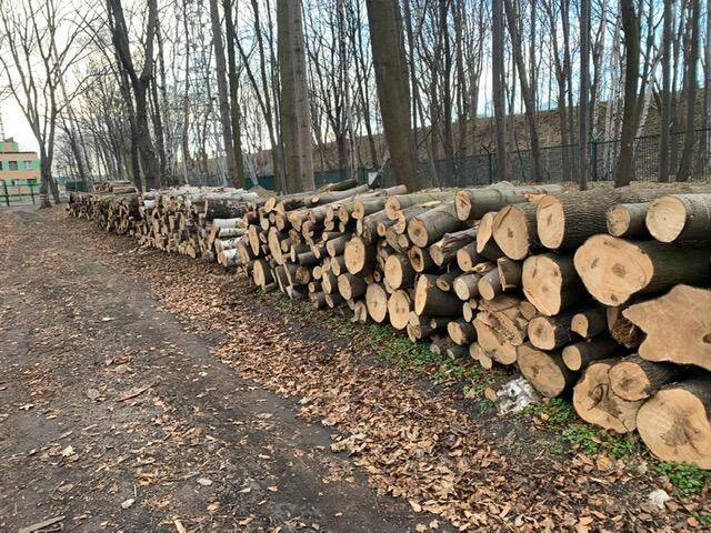 na zdjęciu widać kilkadziesiąt leżących, ułożonych i pociętych pni drzew, wokół nich, po prawej rosną wysokie drzewa