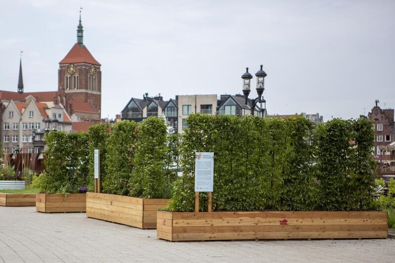 W ramach BO można zgłaszać różne zielone projekty. Mogą to być m.in. stałe kwietne instalacje (instalacja ogrodowa widoczna na zdjęciu powstała w ramach obchodów 30. rocznicy wyborów 4 czerwca 1989 r.)