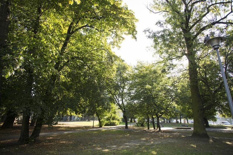 W ramach zielonego Budżetu Obywatelskiego można np. zgłosić projekt dotyczący rewaloryzacji starego miejskiego parku. Na zdjęciu Park Uphagena