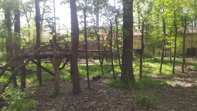 Tak prezentuje się nowy wybieg Columbii w węgierskim zoo