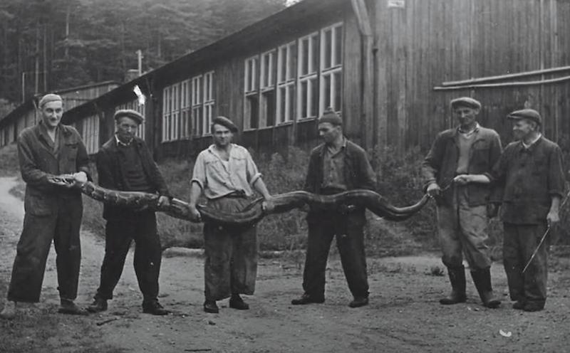 Pracownicy zoo trzymają w rękach węża boa, który był darem od marynarzy